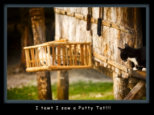 I tawt I saw a putty tat