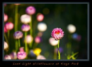 Kings Park WF