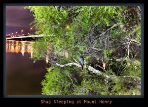 Shag Sleeping