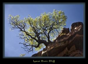 Lynne River Cliff