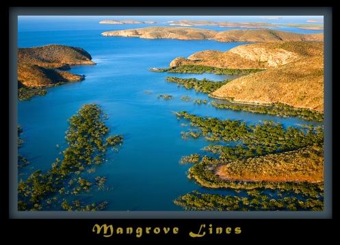 Mangrove Lines