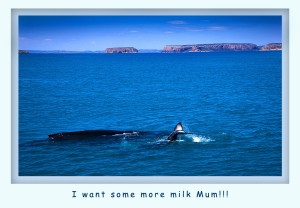 More Milk Mum!!