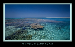 Bedwell Coral