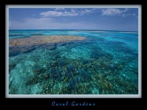 Coral -Gardens
