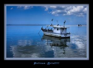 Pelican-Brief